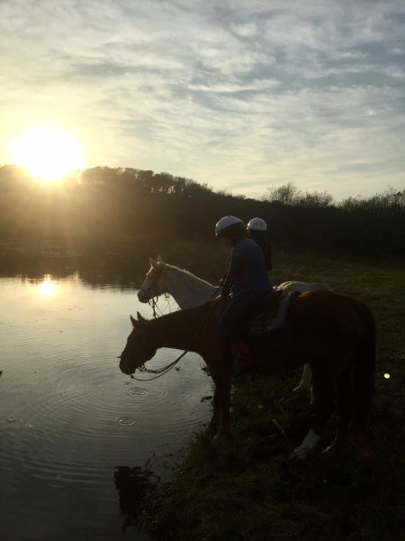 horseback riding students enjoy an evening out on the trail at sunset, pictured here with flea bitten grey gelding named Ghost and ever-faithful chestnut gelding Rocky, who has been helping us with horseback riding lessons for four years